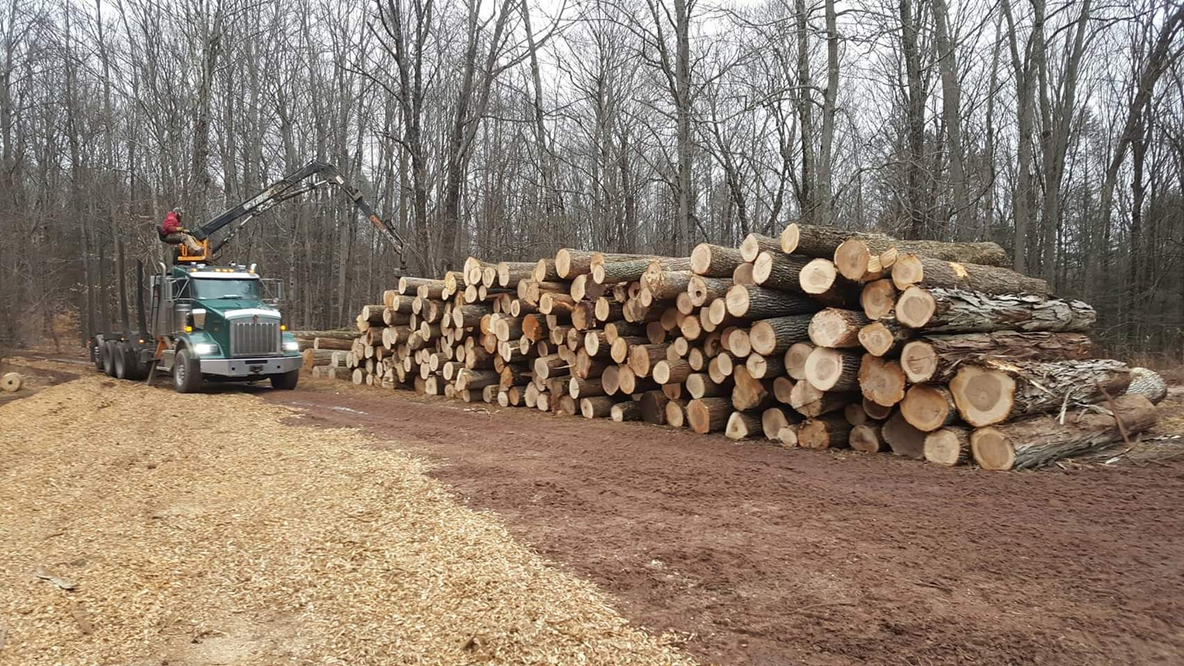 large logs stacked together