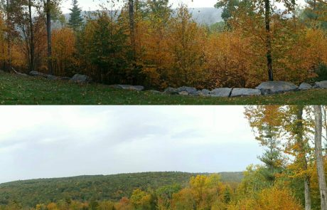 Forest Management Before and After