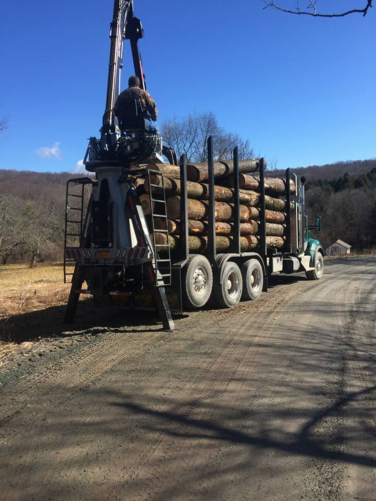 Logs stacked on truck