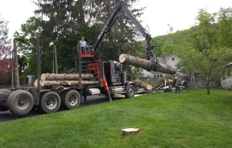Tree Removal Cleanup