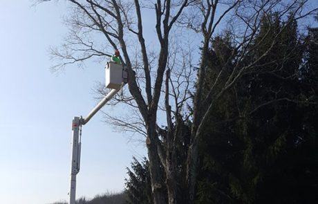 Tree Removal and wood chipper